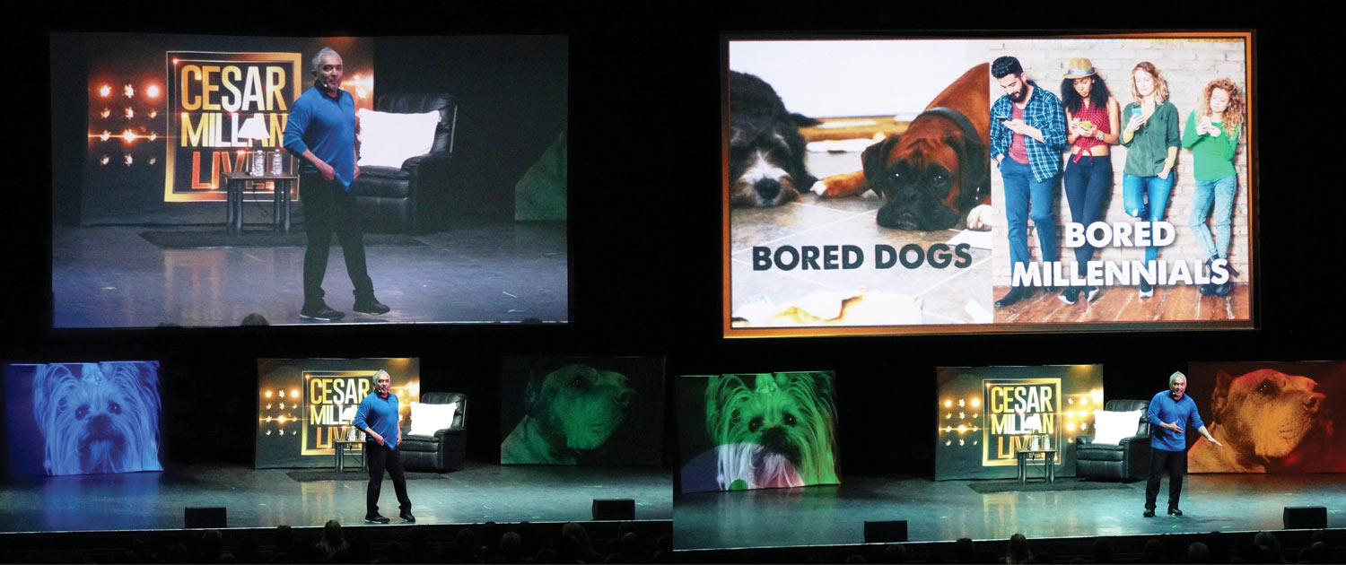 Entec shines a light on the 'Dog Whisperer' Cesar Millan